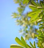 De groene bladeren van de aard op blauwe achtergrond royalty-vrije stock foto's