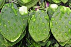 De groene Bladeren van de Cactus Stock Afbeeldingen