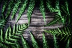 De groene bladeren van de vareninstallatie op donkere rustieke achtergrond Stock Afbeelding