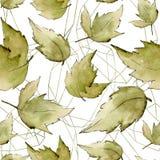 De groene Bladeren van de Esdoorn Botanisch de tuin bloemengebladerte van de bladinstallatie Naadloos patroon als achtergrond Royalty-vrije Illustratie