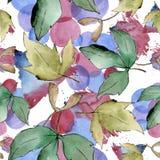 De groene Bladeren van de Esdoorn Botanisch de tuin bloemengebladerte van de bladinstallatie Naadloos patroon als achtergrond Vector Illustratie