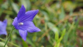 De groene bladeren van Rose Natural met de de onduidelijk beeld bokeh lente of zomer stock foto's