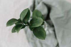 De groene bladeren vertakken zich dicht omhoog stock foto