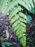 De groene bladeren wijzen erop dat de lucht koel is stock foto