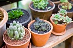 De groene bloem op vaaspot in tuin maakt gevoel vers en ontspant Stock Afbeelding