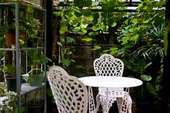De groene bloem op vaaspot in tuin maakt gevoel vers en ontspant Stock Foto