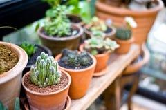De groene bloem op vaaspot in tuin maakt gevoel vers en ontspant Stock Afbeeldingen