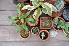 De groene bloem op vaaspot in tuin maakt gevoel vers en ontspant Stock Foto's