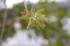 De groene bloem tuiniert moder stock foto