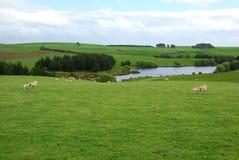 De groene boerderij Royalty-vrije Stock Afbeeldingen