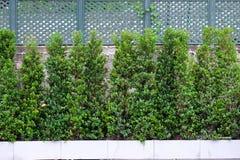 De groene bomen verfraaien de muren en omheiningen de abstracte achtergronden Royalty-vrije Stock Foto's