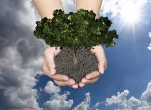 De groene boom bij mensen overhandigt en heeft ter plaatse blauwe hemelbackgrou Stock Afbeeldingen