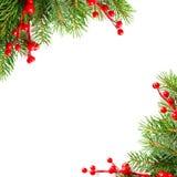 De groene boom van Kerstmis en rode hulstbes Royalty-vrije Stock Foto's