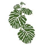 De groene bosaard van plantkunde tropische bladeren vector illustratie