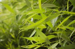 De groene Close-up van Bladeren Verse groene achtergrond Stock Foto