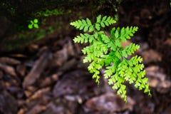De groene close-up van de bladeren zachte nadruk Royalty-vrije Stock Afbeeldingen
