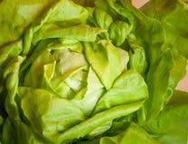 De groene close-up van de bladsla stock afbeeldingen