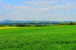 De groene de zonaard van de gebiedenzomer plant bosduitsland Royalty-vrije Stock Foto