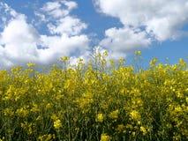 De groene de zonaard van de gebiedenzomer plant bosduitsland Royalty-vrije Stock Afbeelding