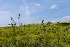 De groene de zonaard van de gebiedenzomer plant bosduitsland Stock Foto's