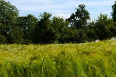 De groene de zonaard van de gebiedenzomer plant bosduitsland Royalty-vrije Stock Fotografie