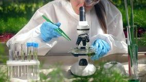 De groene die bladeren worden onder een microscoop worden geanalyseerd stock videobeelden