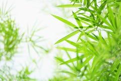 De groene en gele achtergrond van bamboebladeren stock afbeelding
