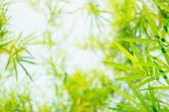 De groene en gele achtergrond van bamboebladeren royalty-vrije stock fotografie