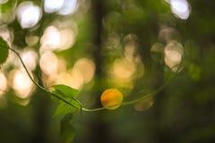 De groene en gele samenvatting vertroebelde achtergrond met installatie en mooie bokeh in zonlicht Macrobeeld met kleine afd. van Royalty-vrije Stock Fotografie
