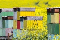 De groene en grijze abstracte achtergrond van het de lentegebied royalty-vrije stock afbeeldingen