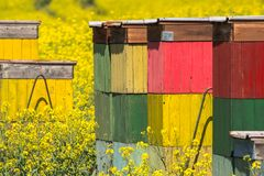 De groene en grijze abstracte achtergrond van het de lentegebied royalty-vrije stock foto's