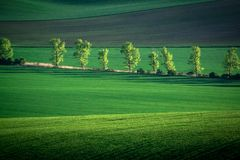 De groene en grijze abstracte achtergrond van het de lentegebied royalty-vrije stock afbeelding