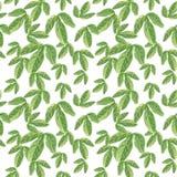De groene exotische passievrucht verlaat naadloos patroon, waterverfillustratie royalty-vrije illustratie