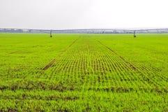 De Groene Gebieden van de landbouw Royalty-vrije Stock Fotografie
