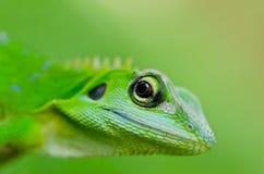 De groene gekko van de close-up Stock Afbeelding