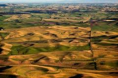 De groene Gele Landbouwbedrijven Palouse Washington van Gebieden stock foto's