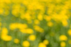 De groene gele vage die achtergrond op bloeiende installaties wordt gebaseerd stock fotografie