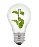 De groene Gloeilamp van de Energie Stock Foto's