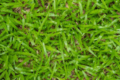 De groene gras naadloze textuur is vers Stock Afbeeldingen