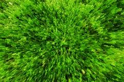 De groene grasachtergrond met 3D drijft effect uit Stock Foto's
