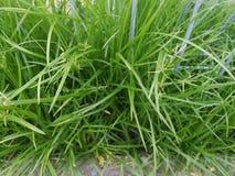 De groene grasclusters worden gegroepeerd door de weg royalty-vrije stock afbeeldingen