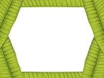 De groene grens van de bladerenkaart Stock Fotografie