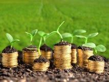 De groene groei, zaken Royalty-vrije Stock Foto's