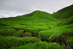 De groene Heuvel Stock Foto