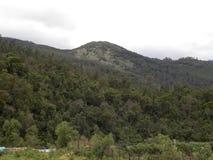 De de groene heuvels en bergketen van Palani met bomen stock foto