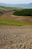 De groene heuvels van Toscanië Stock Fotografie