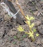 De groene installatie, landbouw die, aard, de groei, de lente, grond, blad, groente, tuin, gebied, jongelui, groeit, zaailing, la royalty-vrije stock foto