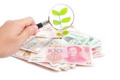 De groene installatie van de controle van geld Stock Foto's