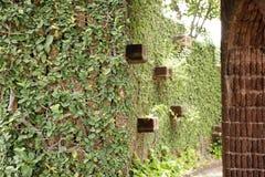 De groene Installatie van de Klimplant Royalty-vrije Stock Foto