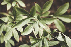De groene installaties in bos, film geven uit royalty-vrije stock foto